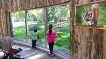 DOĞAL YAŞAM PARKI - İzmir'de Doğal Yaşam Parkına Ziyaretçi Akını