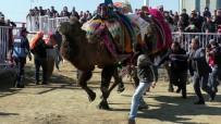 DEVE GÜREŞLERİ - Pehlivan Develer Kozlarını Nazilli'de Paylaştı