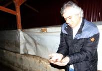 EKOLOJIK - Prof. Dr. Mustafa Türkmen Açıklaması 'Hem Verimi Artırıyor Hem De Hastalıklara Karşı Koruyor'