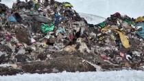 ALLAHUEKBER DAĞLARI - Sıcak Hava Ve Çöplük Bozayıların Uykusunu Kaçırdı