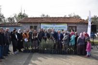 ÜÇPıNAR - Üreticiler Belediyenin Fidanları İle Kalkınacak