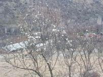 MURAT AKıN - Çemişgezek'te Badem Ağaçları Çiçek Açtı
