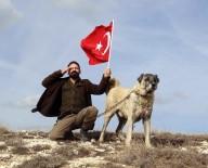 HÜSEYIN YıLDıZ - Kangal Köpekleri Zeytin Dalı Harekatı'na Hazır