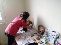 YAVRU KÖPEKLER - Kastamonu'da Çaya Düşen Köpek, İtfaiye Ekiplerince Kurtarıldı
