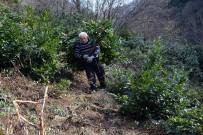 TAFLAN - O Yaprağı Yiyen Hayvanlar Hem Hastalanmıyor Hem De Besili Kalıyor