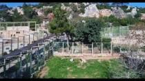 SÖMESTR TATİLİ - Antalya'nın Aslan Eto'o'su Baba Oluyor