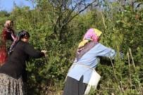 KILIMLI - 'Defne' Ek Gelir Kapısı Oldu, 13 Milyon Lira Kazandırdı