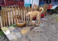 ÖMÜR GEDİK - 'Kuyu' Köpek Kurtarılmasından Bir Sene Sonra Görüntülendi