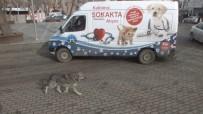 YAŞAM ŞARTLARI - Malazgirt'te 'Kalbimiz Sokakta Atıyor' Projesi