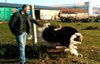 DEVE KUŞU - Samsunlu Avcı Evinin Bahçesinde 35 Türde Hayvan Besliyor