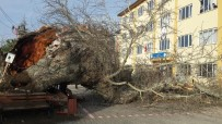 170 yıllık ağaç devrildi