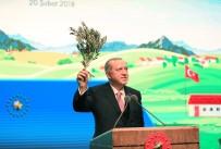 HAYVANCILIK - Cumhurbaşkanı Erdoğan'dan çiftçilere müjde