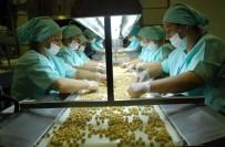 TARıM - Düzce'den 2 Bin 80 Ton İç Fındık İhracı Gerçekleşti