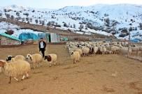 TARıM - Erzincan'da Bir Yılda 150 Bin'den Fazla Hayvan Satıldı