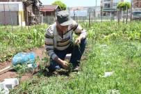 HOBİ BAHÇESİ - Hobi Bahçelerinin Yeni Dönem Sahipleri Belirlenecek
