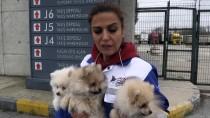 KAPIKULE SINIR KAPISI - İhaleyle Satılan Köpekleri Hayvanseverler Aldı