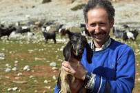 DOPING - Mersin'deki 'Kıl Keçisi Islahı Projesi' Meyvelerini Veriyor
