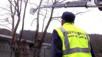 ÇINAR AĞACI - Sakarya'da Arıtma Tesisi Yapımında 'Çınar' Hassasiyeti