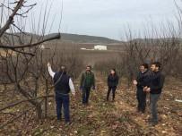 ÇELIKLI - Salihli'de Çiftçi Eğitim Faaliyetlerine Hız Verildi