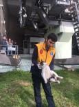 KEMERBURGAZ - Yürüyen Merdivene Sıkışan Kediyi Veteriner Ekipleri Kurtardı