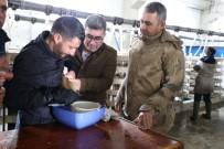 VERGİ MUAFİYETİ - Varto Kaymakamı Çetin, Balık Sağımı Yaptı