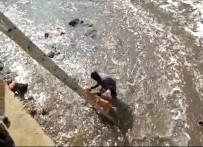 TEMİZLİK İŞÇİSİ - Dereye Düşen Sokak Köpeğini Kurtarmak İçin Kıyafetleriyle Suya Atladı