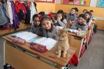 İZMIR İL MILLI EĞITIM MÜDÜRÜ - Kedi Tombi Yeniden Okula Döndü