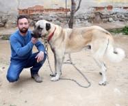 HAYVAN SEVGİSİ - Kötü Alışkanlıklarından Hayvan Sevgisiyle Kurtuldu
