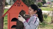 HAYVAN SEVGİSİ - Küçük Elif'in 6 Aylık Harçlığı Kedilere Barınak Oldu