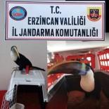 Erzincan'da 25 bin TL değerinde Tukan cinsi kuş ele geçirildi