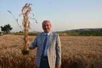 TOPTANCI HALİ - Tekirdağ, Tarım Ve Hayvancılıkta Örnek Olmaya Devam Ediyor