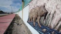 VAN GÖLÜ - Yaban Hayvanlarını Rölyef Ve Heykellerle Sergiliyorlar