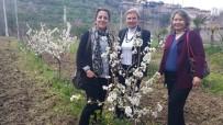 BADEMLI - Bahar Çiçeklerle 'Merhaba' Dedi
