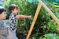 TAŞDELEN - Çankaya'da Kent Tarımı Yaygınlaşıyor