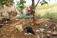 SARıLAR - Köpekler, Tavukları Telef Etti