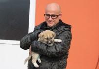YAVRU KÖPEK - (Özel) Şans Köpeği 700 Kilometre Götürüp Sağlığına Kavuşturdular