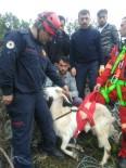 MAHSUR KALDI - Uçurumda Mahsur Kalan Keçiyi İtfaiye Kurtardı