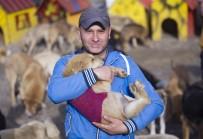 KILIK KIYAFET - Çocuğu Gibi Gördüğü 750 Sokak Köpeğine Tek Başına Bakıyor