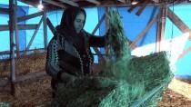 KAYNAR - Koyunları Annesi Yemle Kendisi 'Notalarla Besliyor'