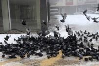 SIBIRYA - Güvercinlere Esnaf Sahip Çıktı