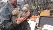 SEBZE HALİ - Yolda önüne çıkan yavru köpekleri ölümden kurtardı