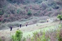 KANDILLI - 49 Gündür Kayıp Olan Yaşlı Adam Ormanlık Alanda Arandı