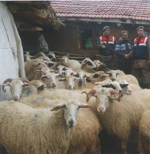Çalınan 41 Koyun Bulunarak, Sahibine Teslim Edildi