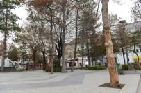KALDIRIMLAR - Çorum'da Kuruyan Ağaçların Yerine Yenileri Dikilecek
