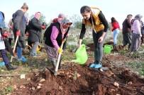 SARıLAR - Erdemli'de Yanan Orman Alanına 500 Fidan Dikildi