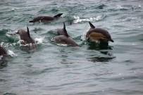 YUNUSLAR - Karadeniz'de Yunusların Dansı