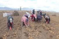 ALPASLAN KAVAKLIOĞLU - Patatese Verilen Teşvik Çiftçiyi Rahatlatacak