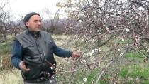 BARAJ GÖLÜ - Kayısı Ağaçları Erken Çiçek Açtı