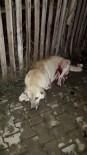 Tüfekle Vurulan Köpek İlçeyi Ayağa Kaldırdı