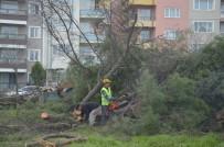AYDOĞAN - Manisa'da Kesilen Ağaçlar Tepkiye Neden Oldu